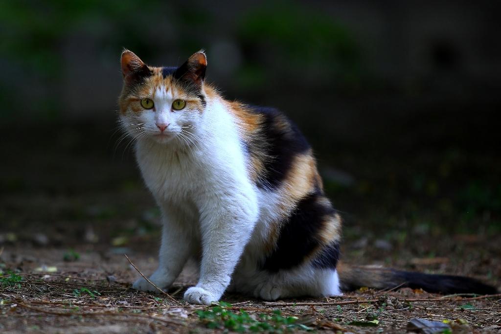 野猫流浪猫区别 认养时注意?