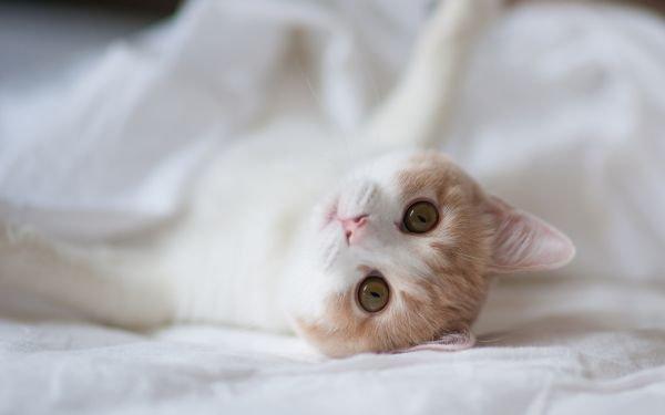 猫流产症状
