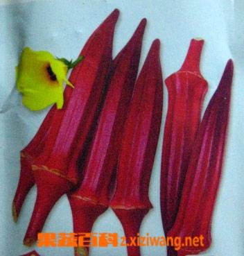 果蔬百科红秋葵的种植方法和功效
